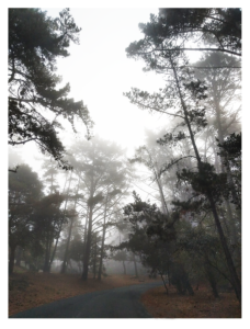 Trees in a mist photo