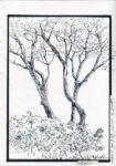Tree Drawing - Newark Arts Alliance